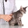 Ветеринарные клиники в Кораблино